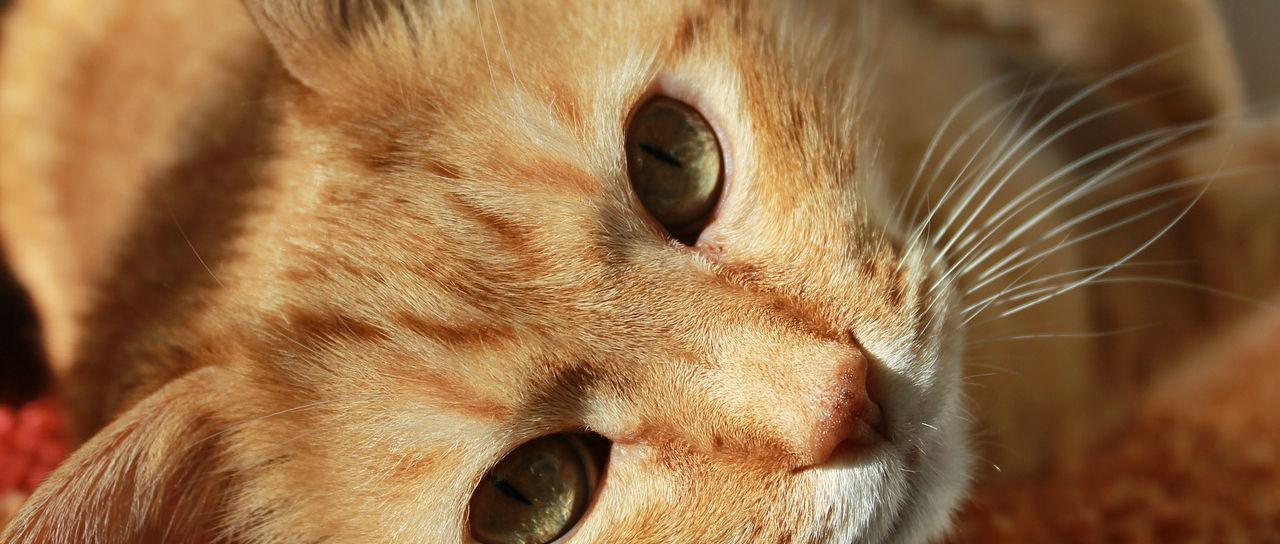 cat-636172_1280